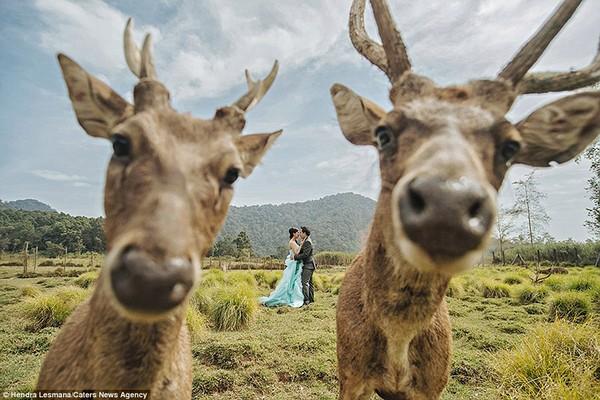 esküvőifotók18
