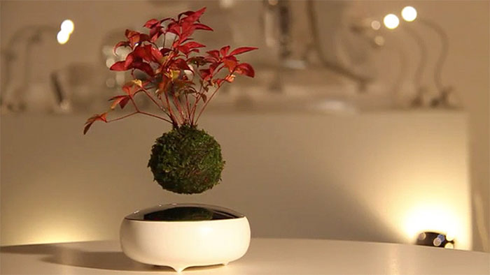 floating-bonsai-trees-air-hoshinchu-25