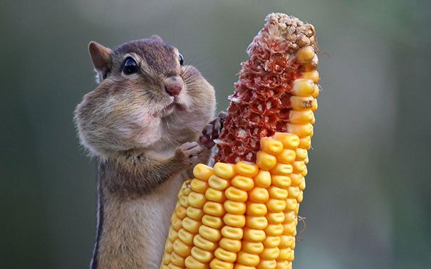 funny-animals-eating-32__605