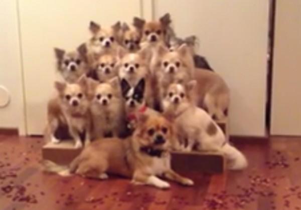 kutyafegyelem1