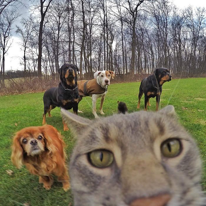 manny-cat-takes-selfies-dogs-gopro-14