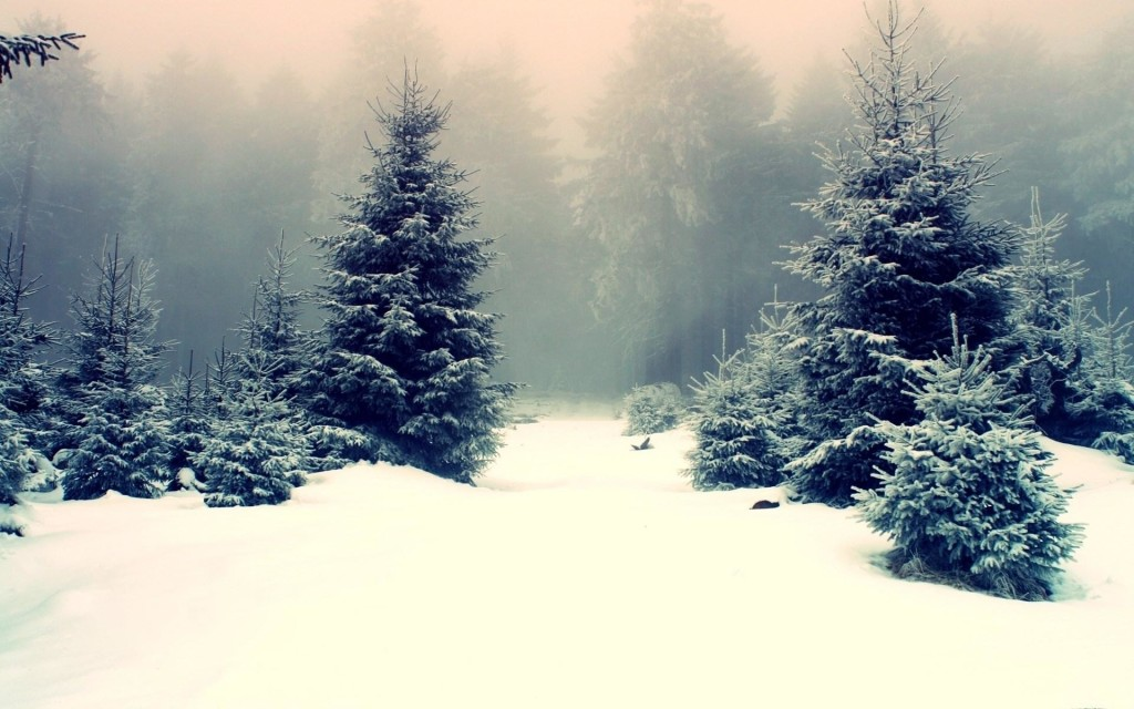 nature_winter_trees_forest_snow_wonderful_photo