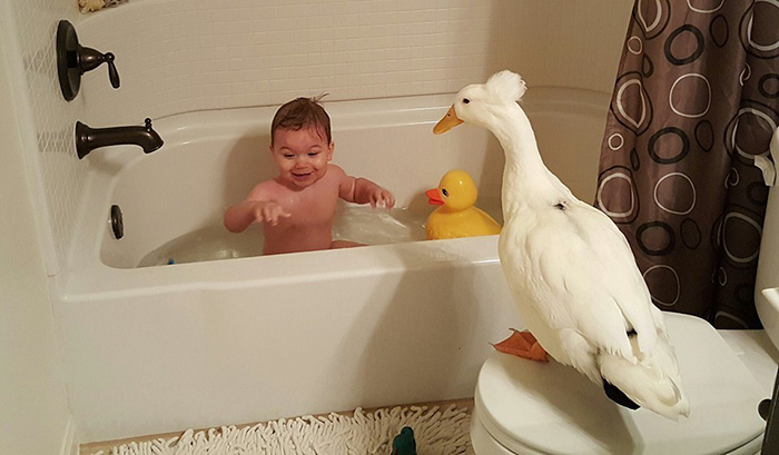 pet-duck-boy-best-friends-mr-t-and-bee-tyler-young-1 (1)