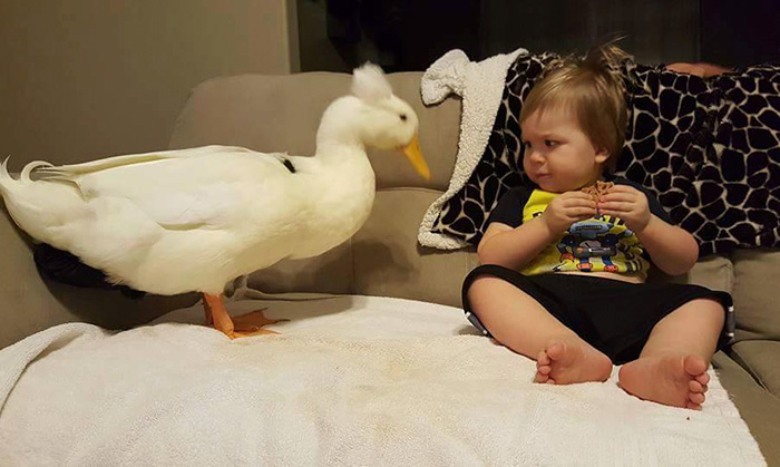 pet-duck-boy-best-friends-mr-t-and-bee-tyler-young-15