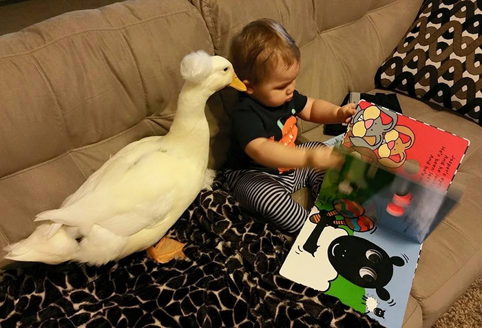 pet-duck-boy-best-friends-mr-t-and-bee-tyler-young-2