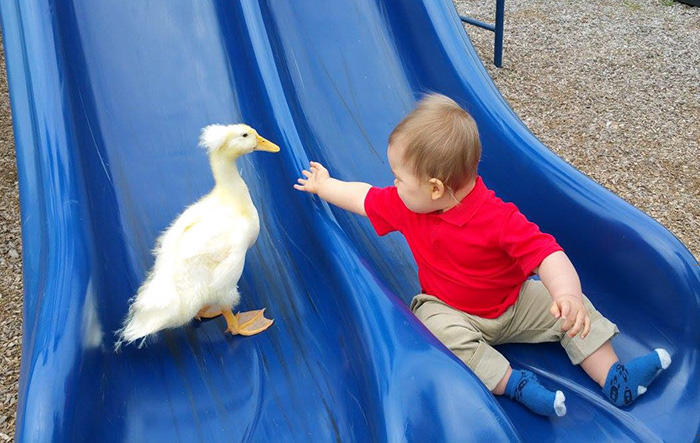 pet-duck-boy-best-friends-mr-t-and-bee-tyler-young-8 (1)
