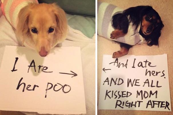 pet-shaming-duo-criminals-14__605