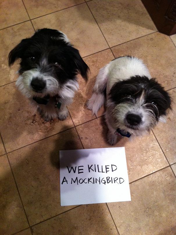 pet-shaming-duo-criminals-17__605