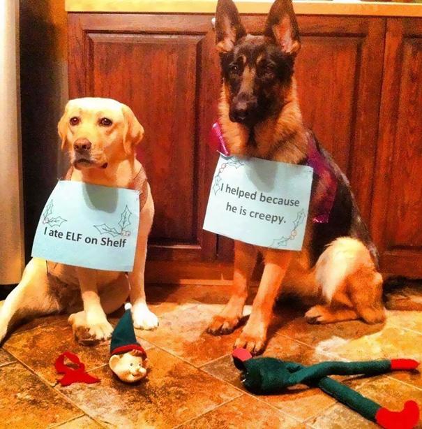 pet-shaming-duo-criminals-26__605