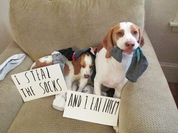 pet-shaming-duo-criminals-2__605