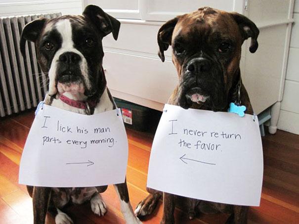 pet-shaming-duo-criminals-3__605
