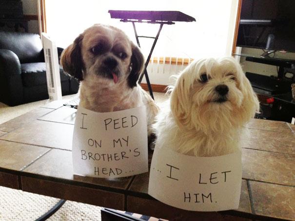 pet-shaming-duo-criminals-6__605