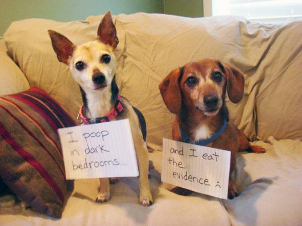pet-shaming-duo-criminals-7__605
