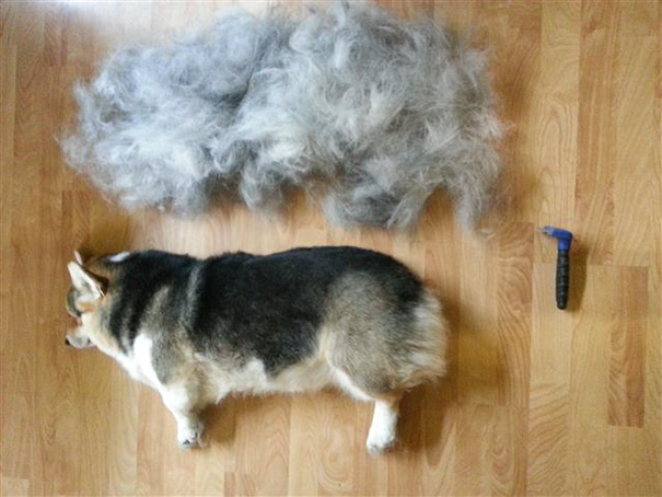 pet-shedding-cats-dogs-hair-261__605
