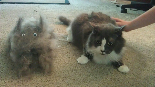 pet-shedding-cats-dogs-hair-291__605