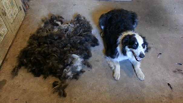 pet-shedding-cats-dogs-hair-341__605
