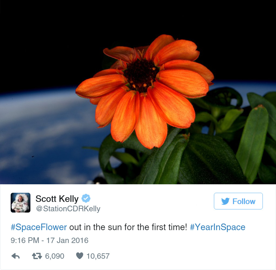 space-first-flower-bloom-nasa-scott-kelly-18