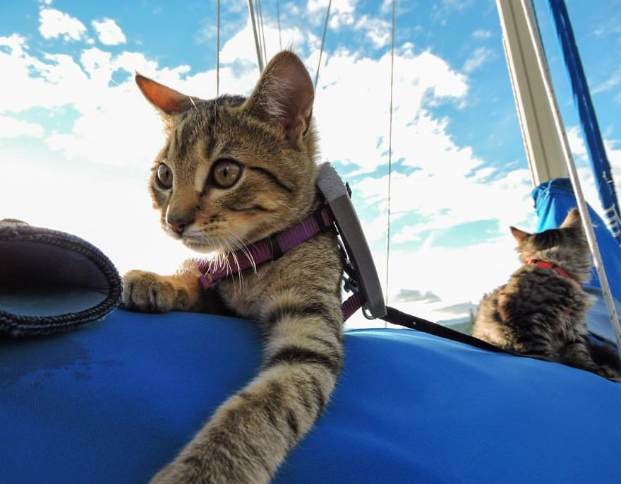 these-kittens-were-abandoned-but-now-go-on-epic-adventures-with-us-10__880