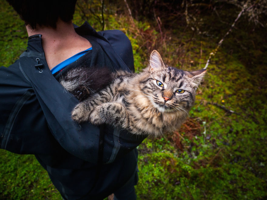 these-kittens-were-abandoned-but-now-go-on-epic-adventures-with-us-5__880