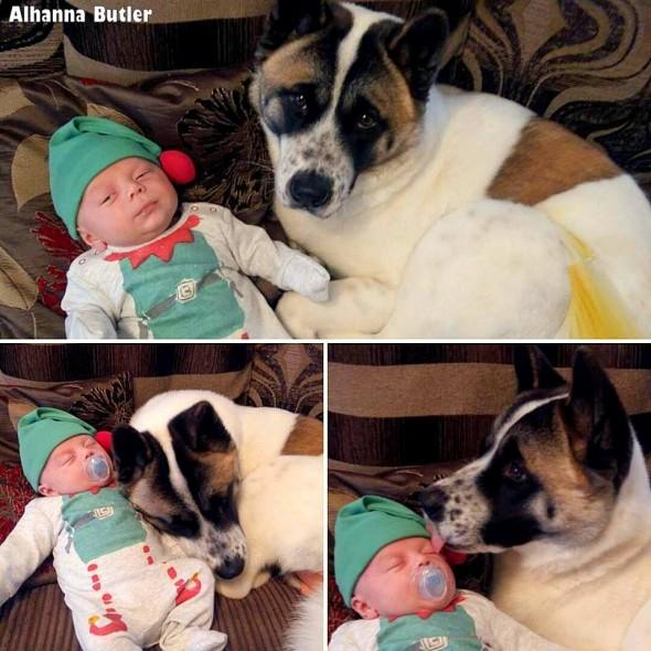 2.17.16-Dog-Saves-Pregnant-Woman3-590x590