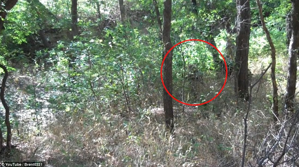 317C0A3F00000578-3460884-There_he_is_In_the_video_nestled_among_the_foliage_this_camoufla-a-12_1456267024785