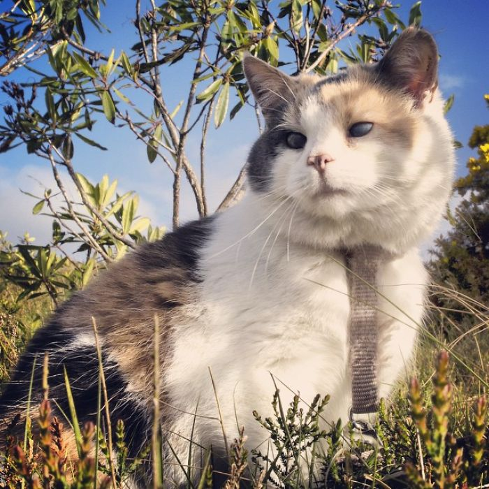 Meet-Stevie-My-Blind-Rescued-Cat-Who-Loves-To-Go-Hiking1__700