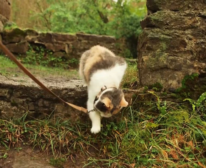 Meet-Stevie-My-Blind-Rescued-Cat-Who-Loves-To-Go-Hiking7__700