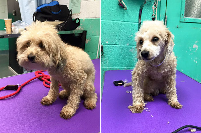 barber-gives-free-haircuts-shelter-dogs-mark-imhof-48