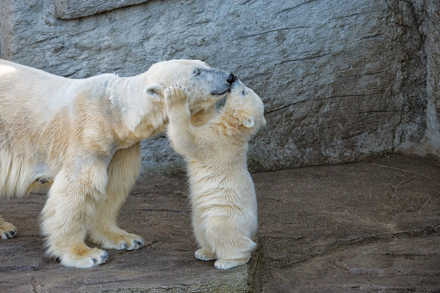 cute-baby-polar-bear-day-photography-231__880