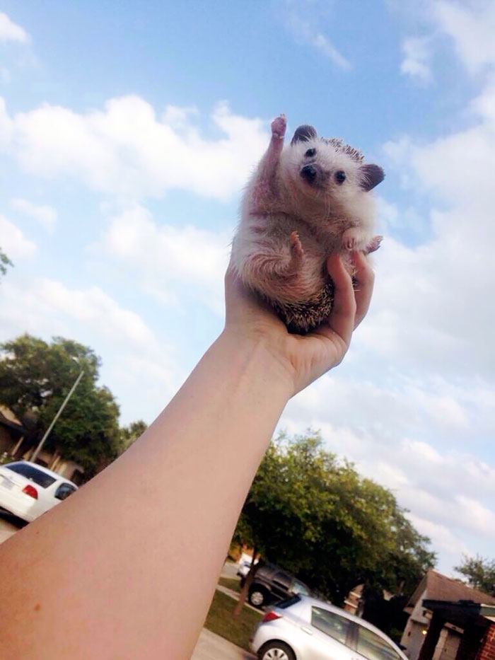 cute-hedgehogs-15__700