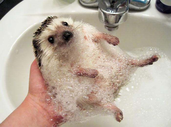 cute-hedgehogs-20__700