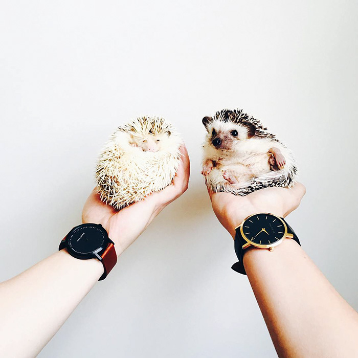cute-hedgehogs-33__700