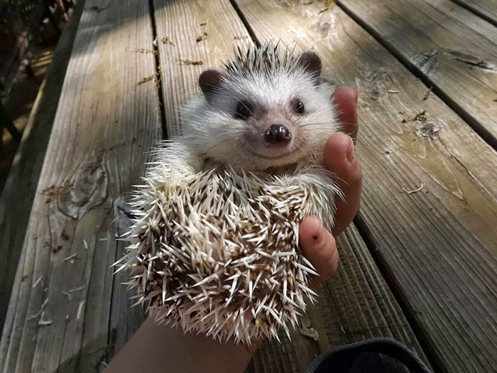 cute-hedgehogs-37__700