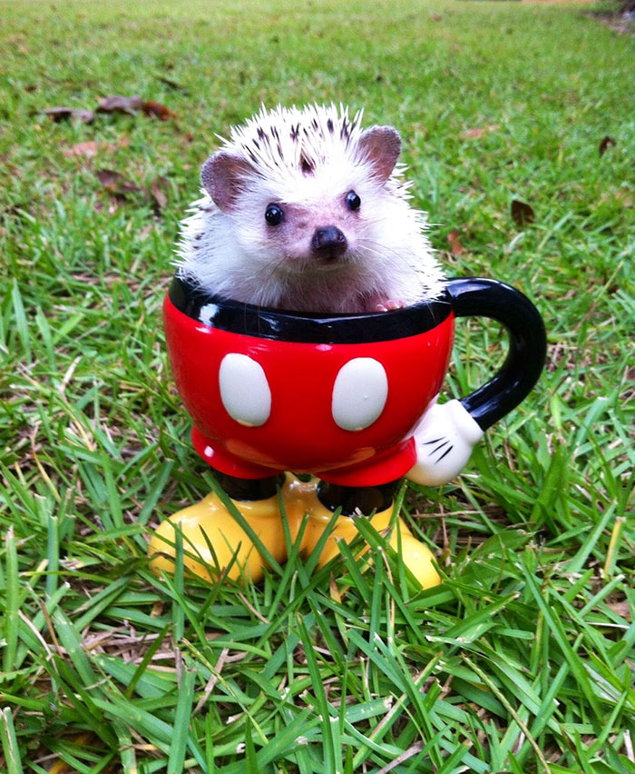 cute-hedgehogs-39__700