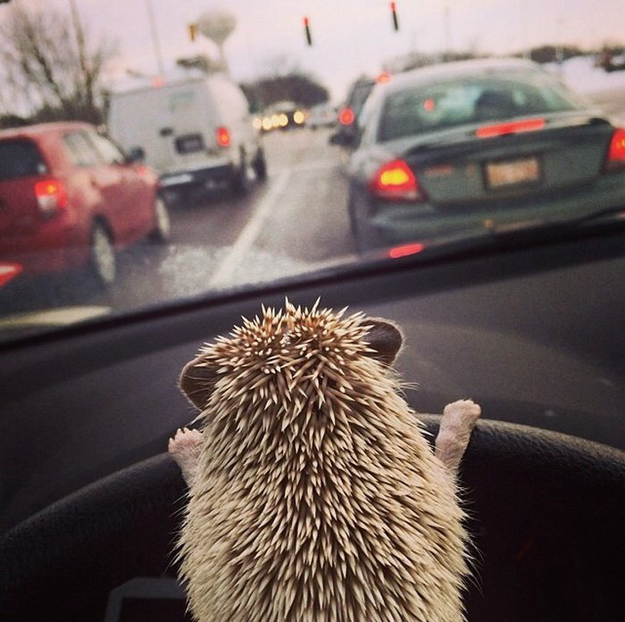cute-hedgehogs-44__700