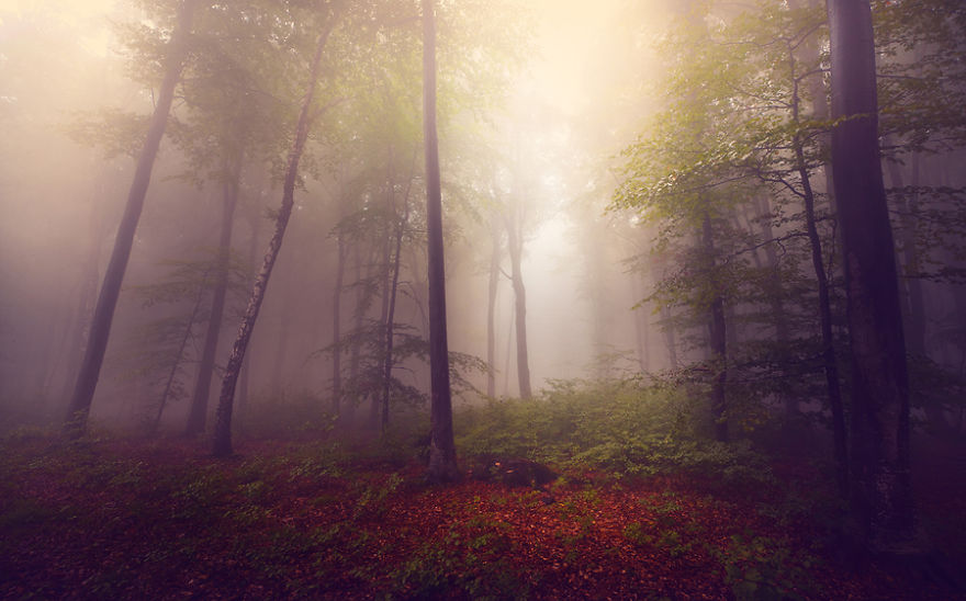 i-create-stories-of-the-forests-10__880