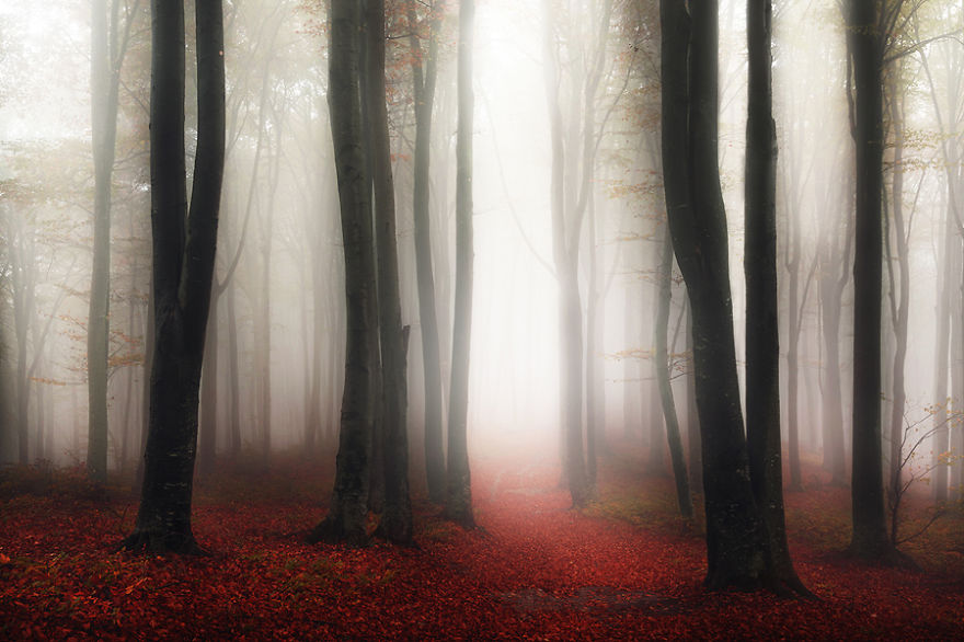 i-create-stories-of-the-forests-12__880