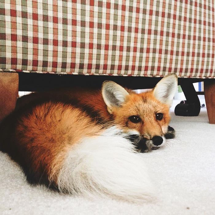 juniper-fox-happiest-instagram-13 (1)