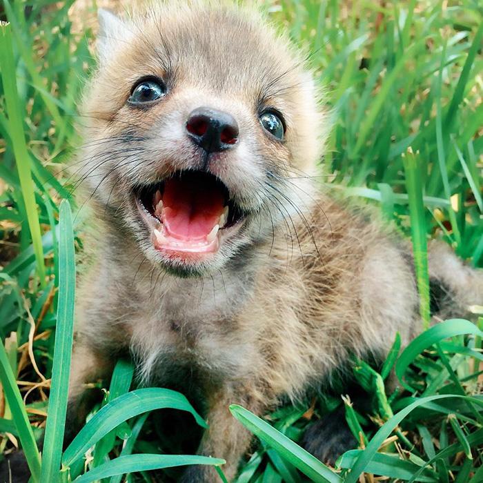 juniper-fox-happiest-instagram-19