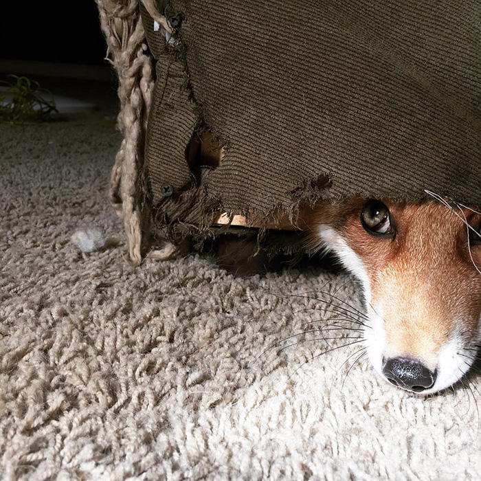 juniper-fox-happiest-instagram-2