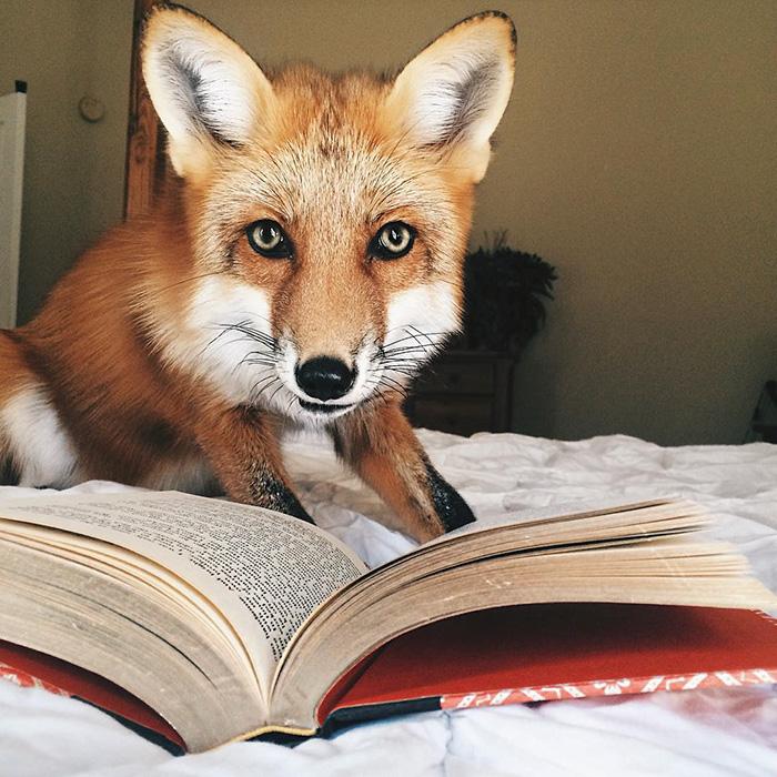 juniper-fox-happiest-instagram-22
