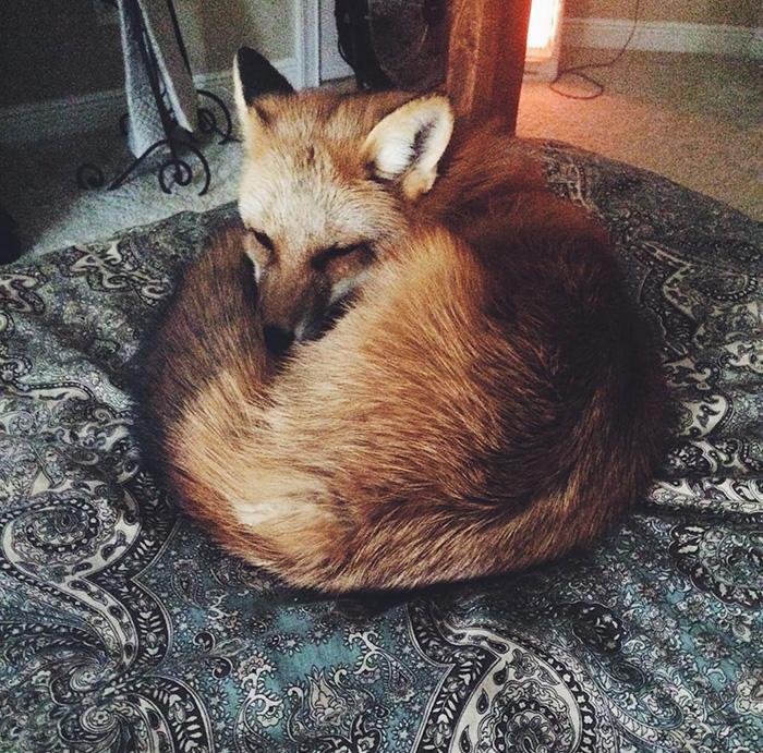 juniper-fox-happiest-instagram-28