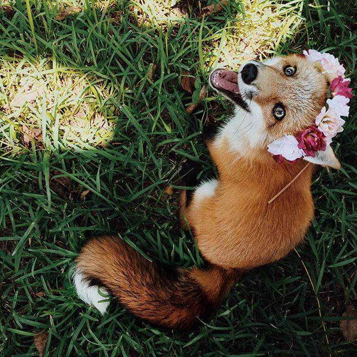 juniper-fox-happiest-instagram-37