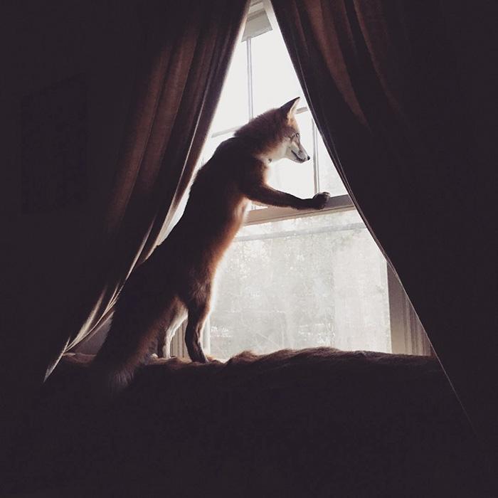 juniper-fox-happiest-instagram-6