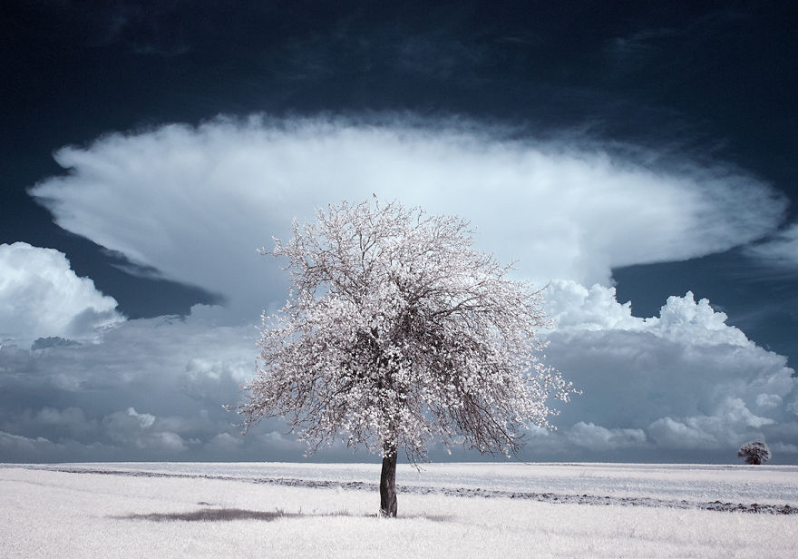 the-majestic-beauty-of-trees-captured-in-infrared-photography-4__880