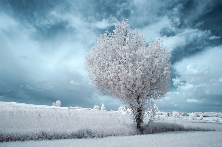 the-majestic-beauty-of-trees-captured-in-infrared-photography-9__880
