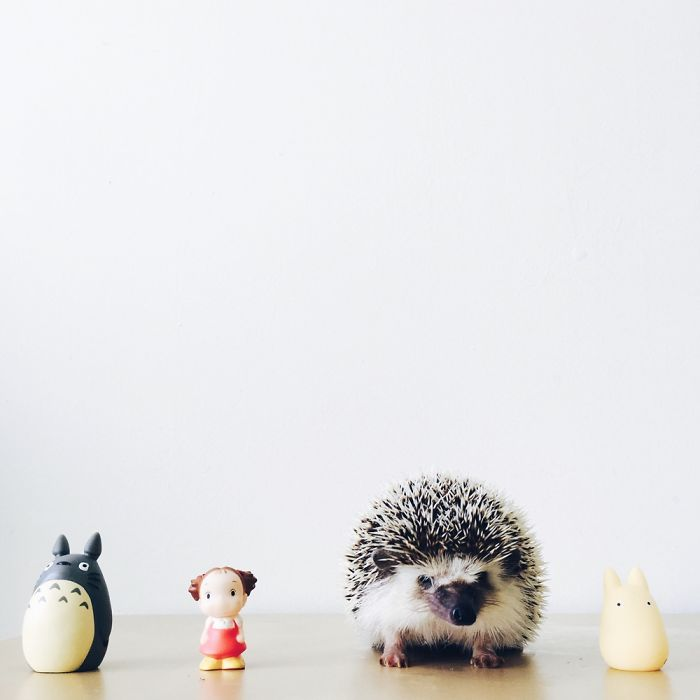 the-ordinary-lives-of-my-ordinary-hedgehogs-2__700