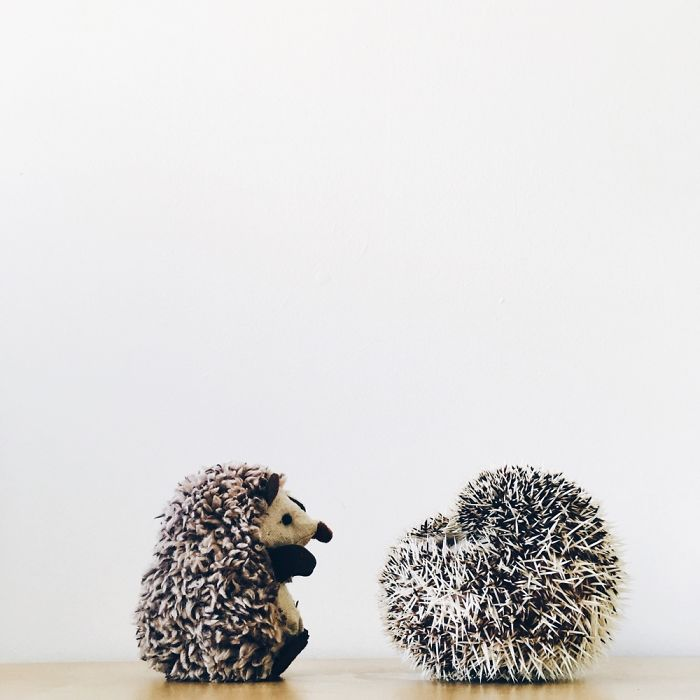 the-ordinary-lives-of-my-ordinary-hedgehogs-6__700