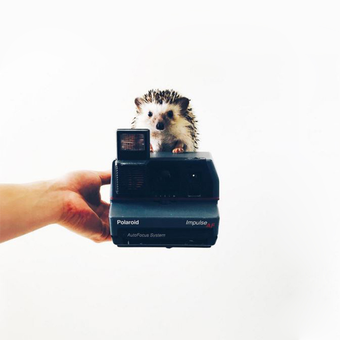 the-ordinary-lives-of-my-ordinary-hedgehogs-8__700