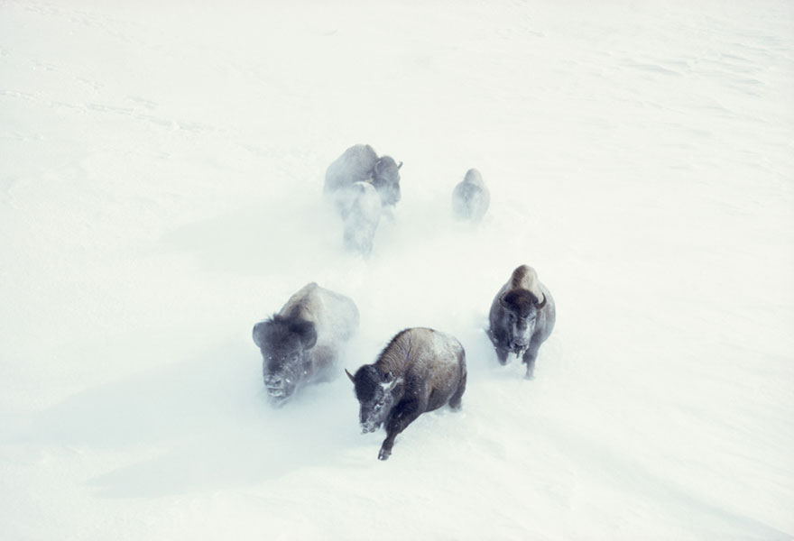 unpublished-photos-national-geographic-found23__880
